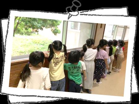 プール開き・七夕・夏祭り・お泊り保育(4・5歳児)